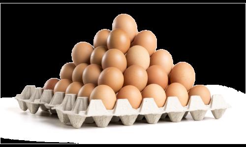 Consumptie eieren